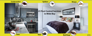5 star pest control in hervey bay