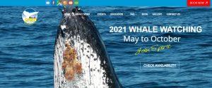 spirit whale watching in gold coast