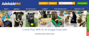 doggy day care by adelaidevet