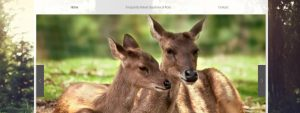 Lyell Deer Sanctuary in Brisbane